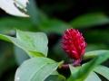 Blüte im Regenwald