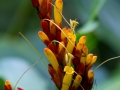 Blüte in El Yunque