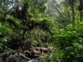 El Yunque - Dickicht