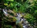 Fluss im El Yunque