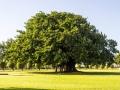 The Bacardi Tree
