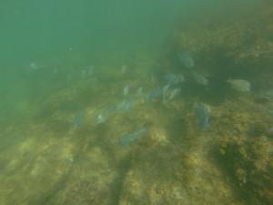 Grünstich in der Unterwasserfotografie