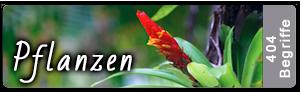 Lightroom Stichwortliste Pflanzen